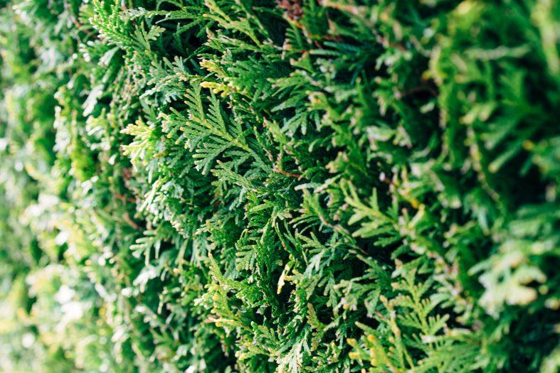 Sichtschutz für den Garten – die 3 besten Optionen